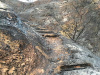 Fish Fire damage along the access trail to Van Tassel Fire Road, Duarte, June 23, 2016