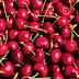 Prevén exportar 2.800 toneladas de cerezas patagónicas