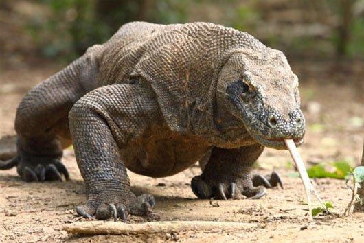 Những loài vật cực kỳ nguy hiểm mà con người nên tránh xa