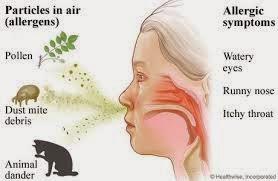 Obat Tradisional untuk Alergi yang Kambuh