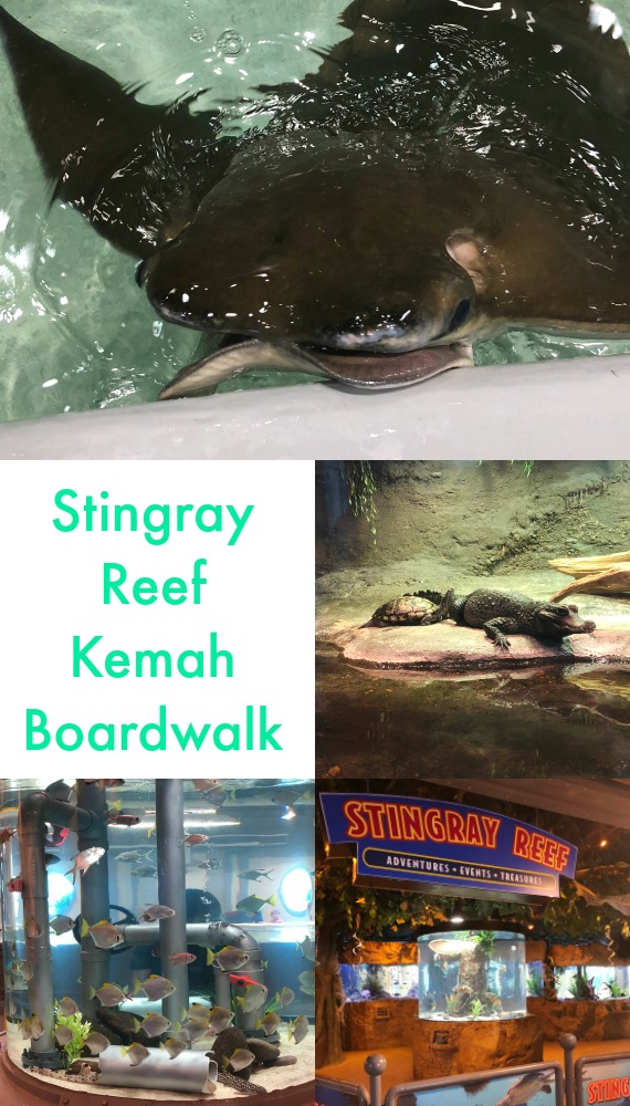 Stingray Reef at Kemah Boardwalk Texas