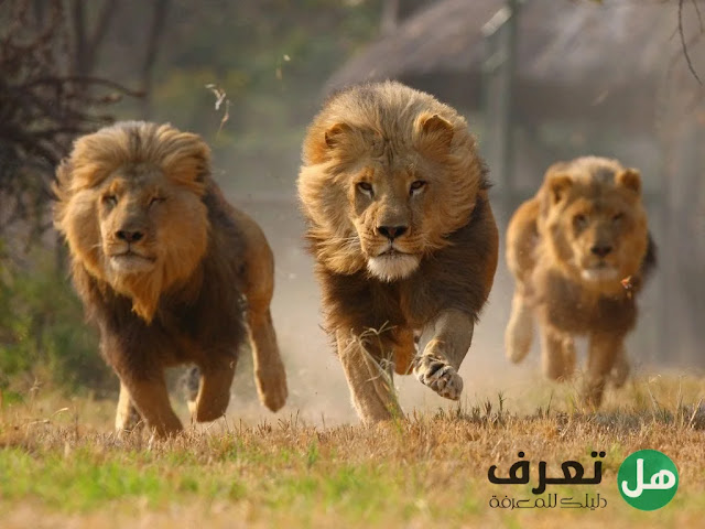 هل تعرف, ما هي أقوى الحيوانات المفترسة في العالم ؟