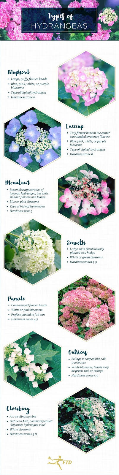 Identifying Different Types Of Hydrangeas Living With Thanksgiving