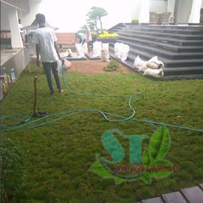 Tukang Rumput Bubulak Bogor - SuryaTaman