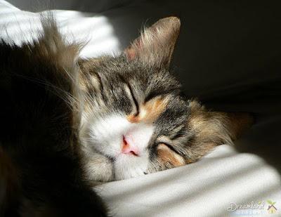 Get Memory Foam Mattresses To Improve Your Sleep