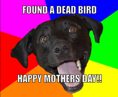 Funny Mothers Day memes Free