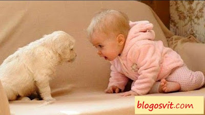 Babies Cute and Puppies