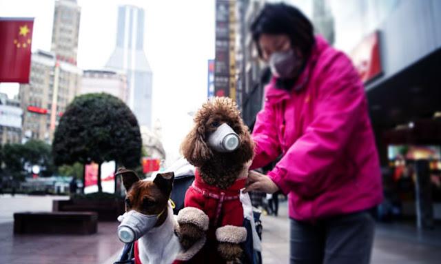 نفوق أول كلب بفيروس كورونا
