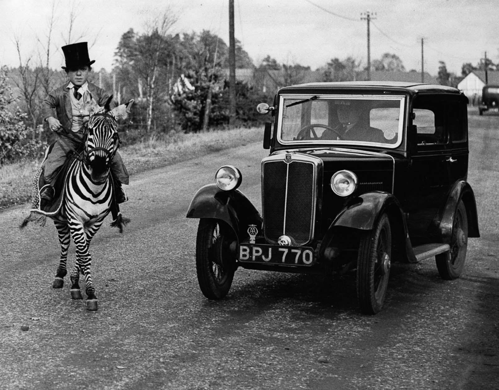 riding zebras photographs