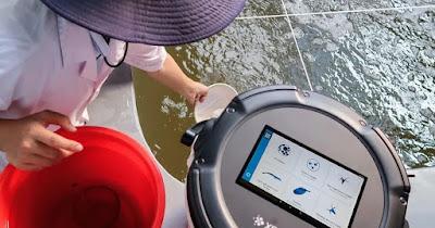 Pemanfaatan Teknologi AI dalam Pengukuran Udang (Sumber: thefishsite.com)