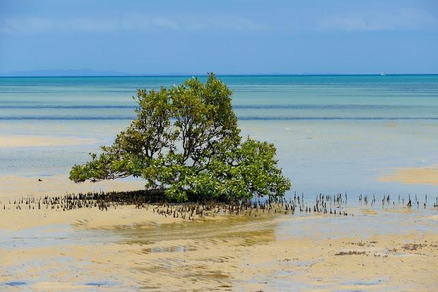 Mangrove Meer modrig Pflanzen Natur