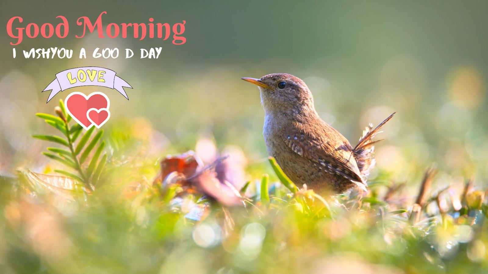 Fair Little Bird Good Morning image