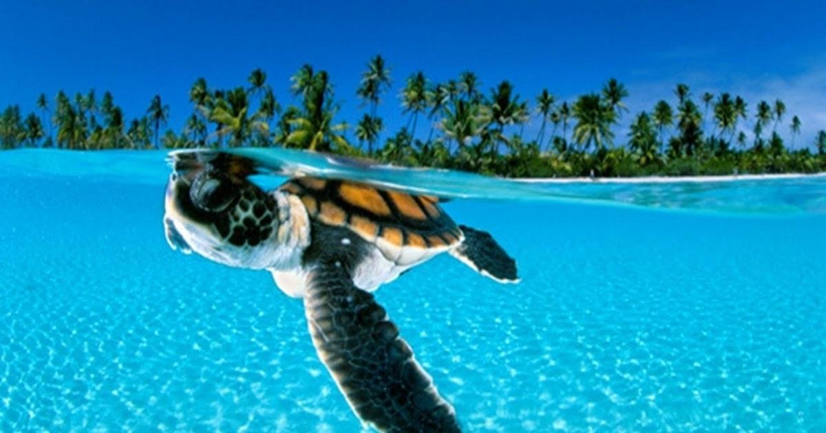 Fondos De Pantalla Del Mar: IMAGENES ANIMALES EN ALTA DEFINICION: IMAGEN TORTUGA DEL