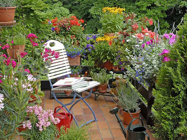 Mini Rose Gardens ideas for balconies