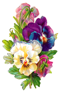 flower pansy wildflower digital clipart download image botanical art