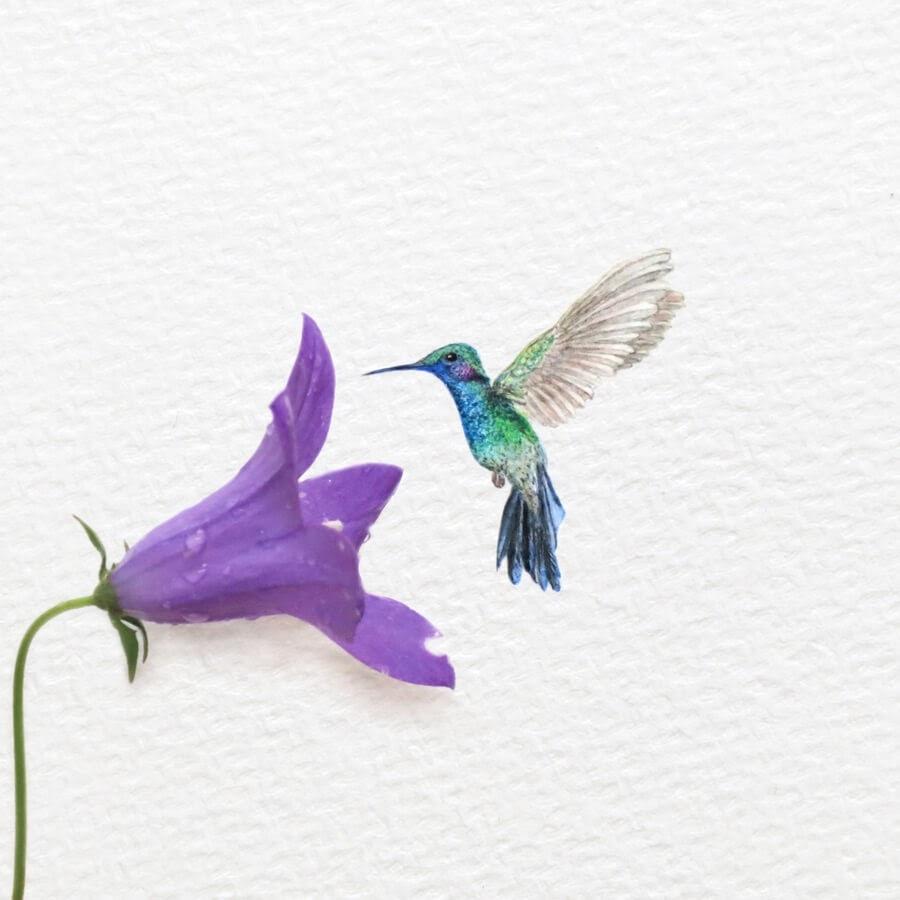 02-Hummingbird-Frank-Holzenburg-www-designstack-co