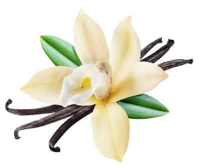 10 Perfume that smells like vanilla