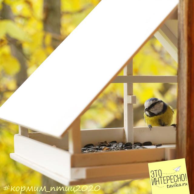 съемка птиц на кормушке