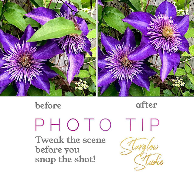 Take better photos - demonstrating my photo tip for nature photography.