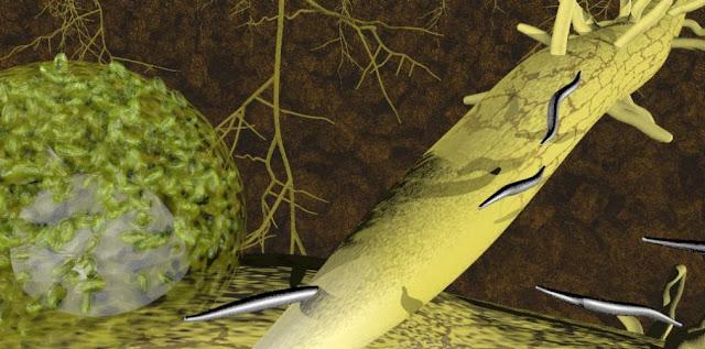 Nematodos fitoparasitos y biologia
