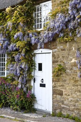 Charming wisteria in bloom on #Frenchfarmhosue with stone and white wood door