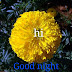 Top 10 Good Night Images greeting Pictures,Photos for Whatsapp