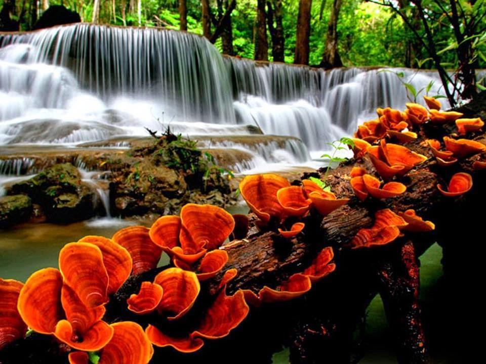 MUNDO NATURAL - AS MAIS BELA PAISAGENS DO PLANETA
