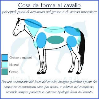 Punti di riferimento per la valutazione della forma fisica del cavallo