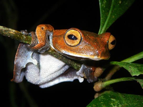 10 Weirdest Life-forms of 2011 | Amazing Creatures