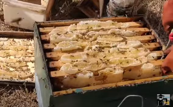 Φεύγω τώρα αμέσως για Σ. Αραβία γιατί τα μέλια είναι στην έρημο video