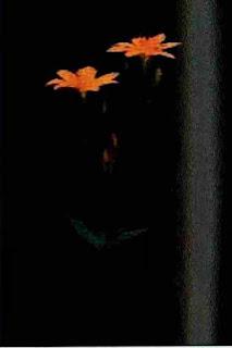 Flores de Tlanchalagua