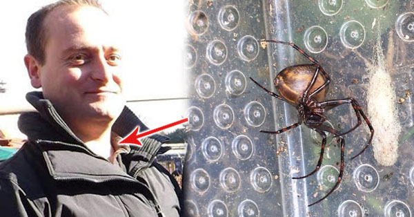 2tY9wIJ Man Had A Terrifying Discovery Of Finding More Than 60 Venomous Spiders Inside His Home!