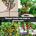 The best dwarf fruit trees to grow in pots #Fruit_Gardening