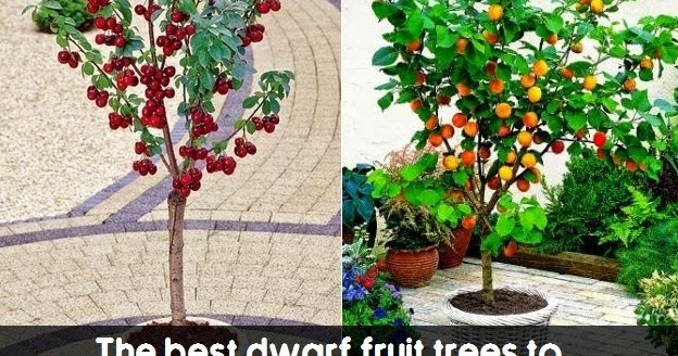 the best dwarf fruit trees to grow in pots fruitgardening  my, Natural flower