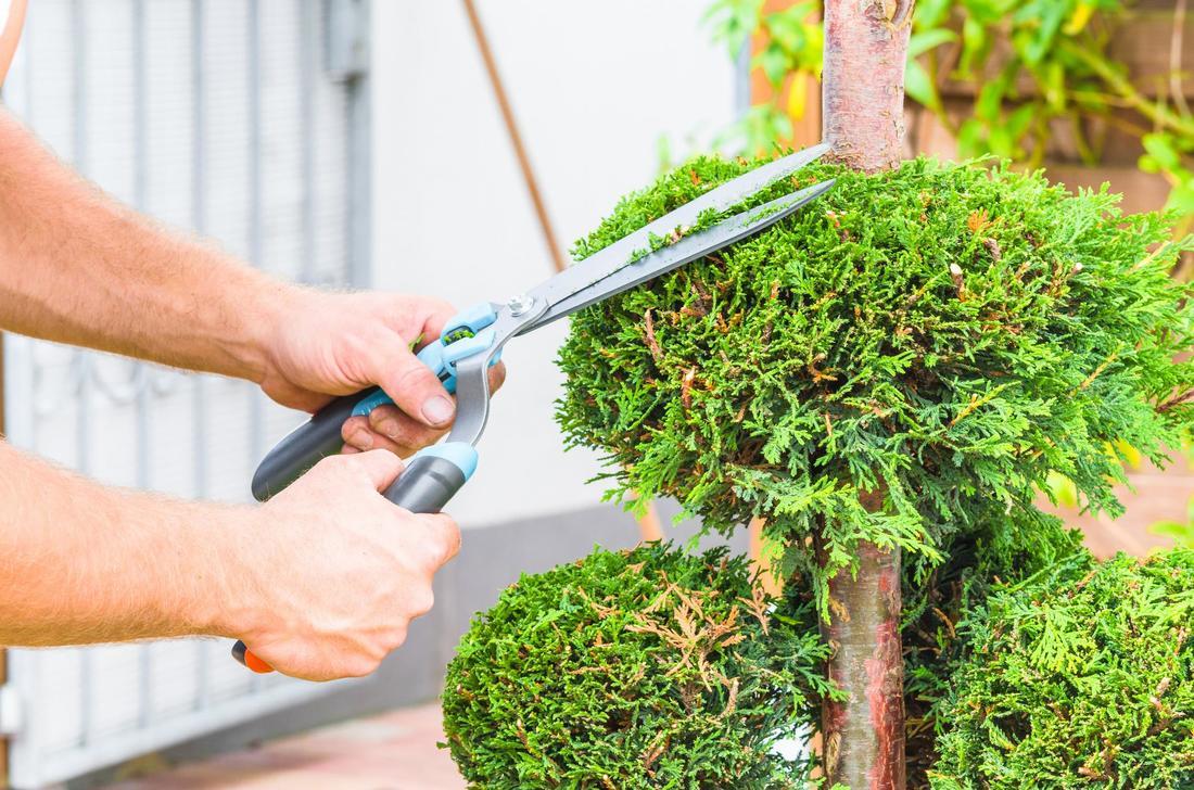 tree-pruning-in-CA