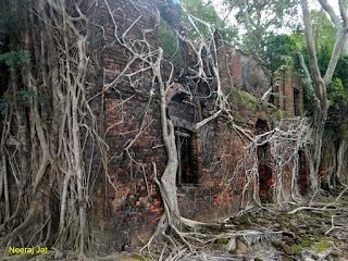 रॉस द्वीप - ऐसे खंड़हर जहाँ पेड़ों का कब्ज़ा है