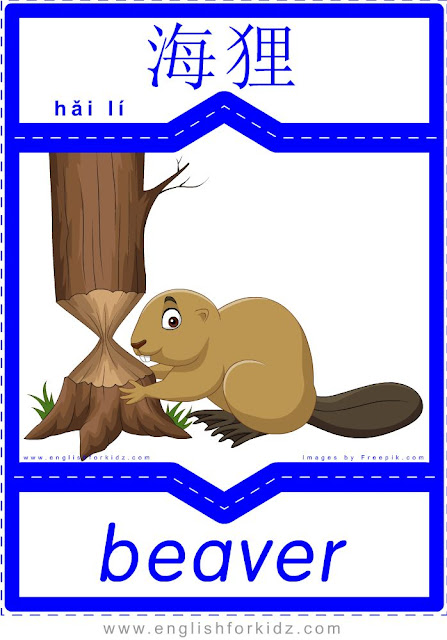 Beaver - English-Chinese flashcards for wild animals topic