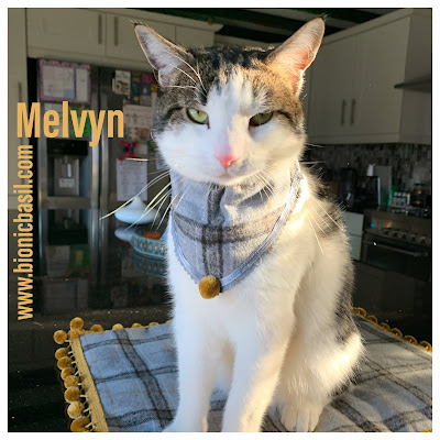Melvyn - Fashionable Felines ©BionicBasil® The Pet Parade 325