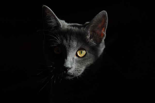 cat image with black background