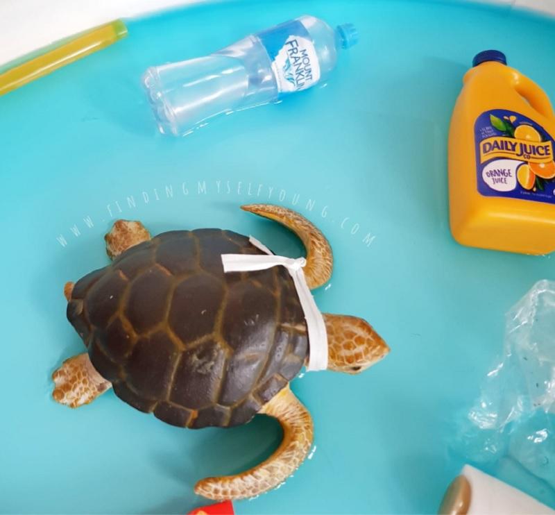 turtle trapped in rubbish