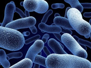 Asexual reproduction bacteria called c-diff