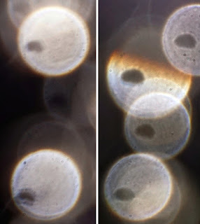semicircles in orbs
