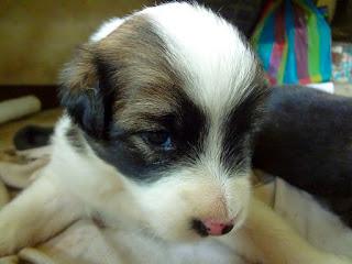 Anak anjing pendeteksi penyakit kanker