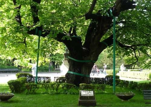 Teiul lui Eminescu din Parcul Copou