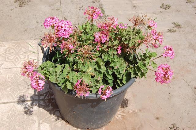 كيف تحمي نباتاتك من أشعة الشمس في الصيف