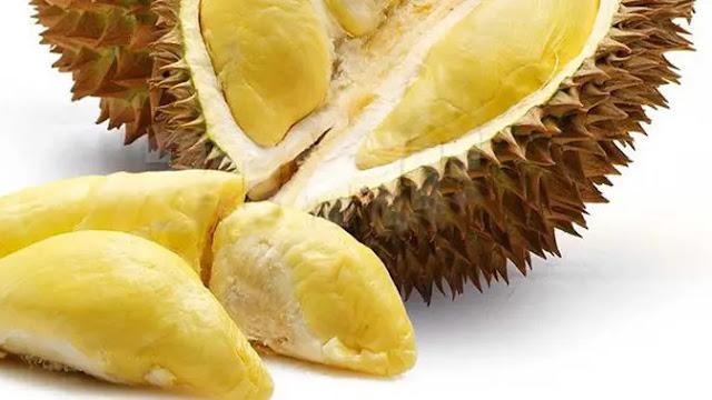 Berapa Tarif Supplier Jual Durian Montong Ambon, Maluku Termurah