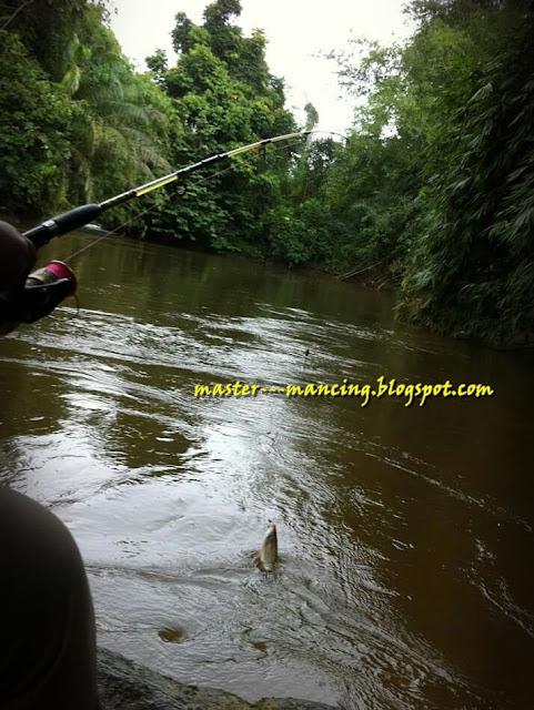 Umpan Mancing Di Sungai, Pilihan Jitu Dan Ampuh