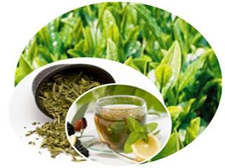 thé vert, corps, maigrir, radico, boire