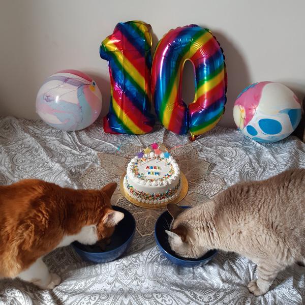 Festa de Aniversário de Gato