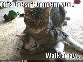best cat memes, cat memes, funny cat memes, funny kitten memes, kitten memes, kitty memes, New cat memes compilation,